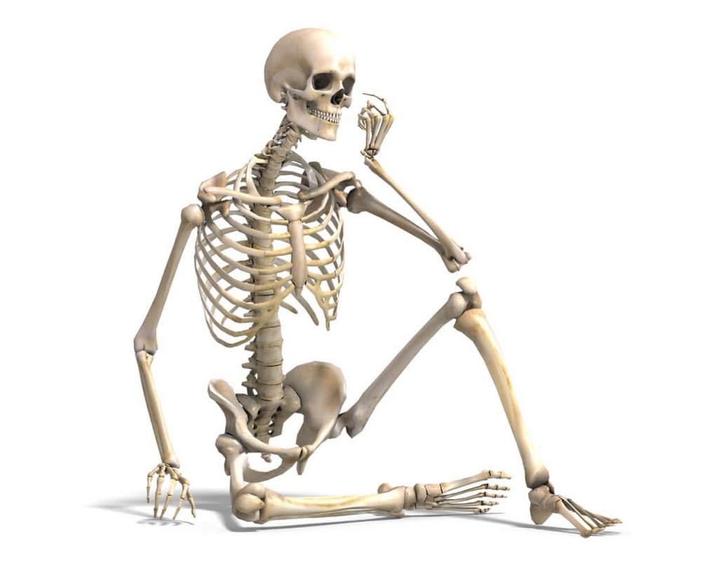 nitric oxide is essential for bone formation 1024x804 2