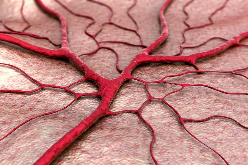 blood vessels in penis