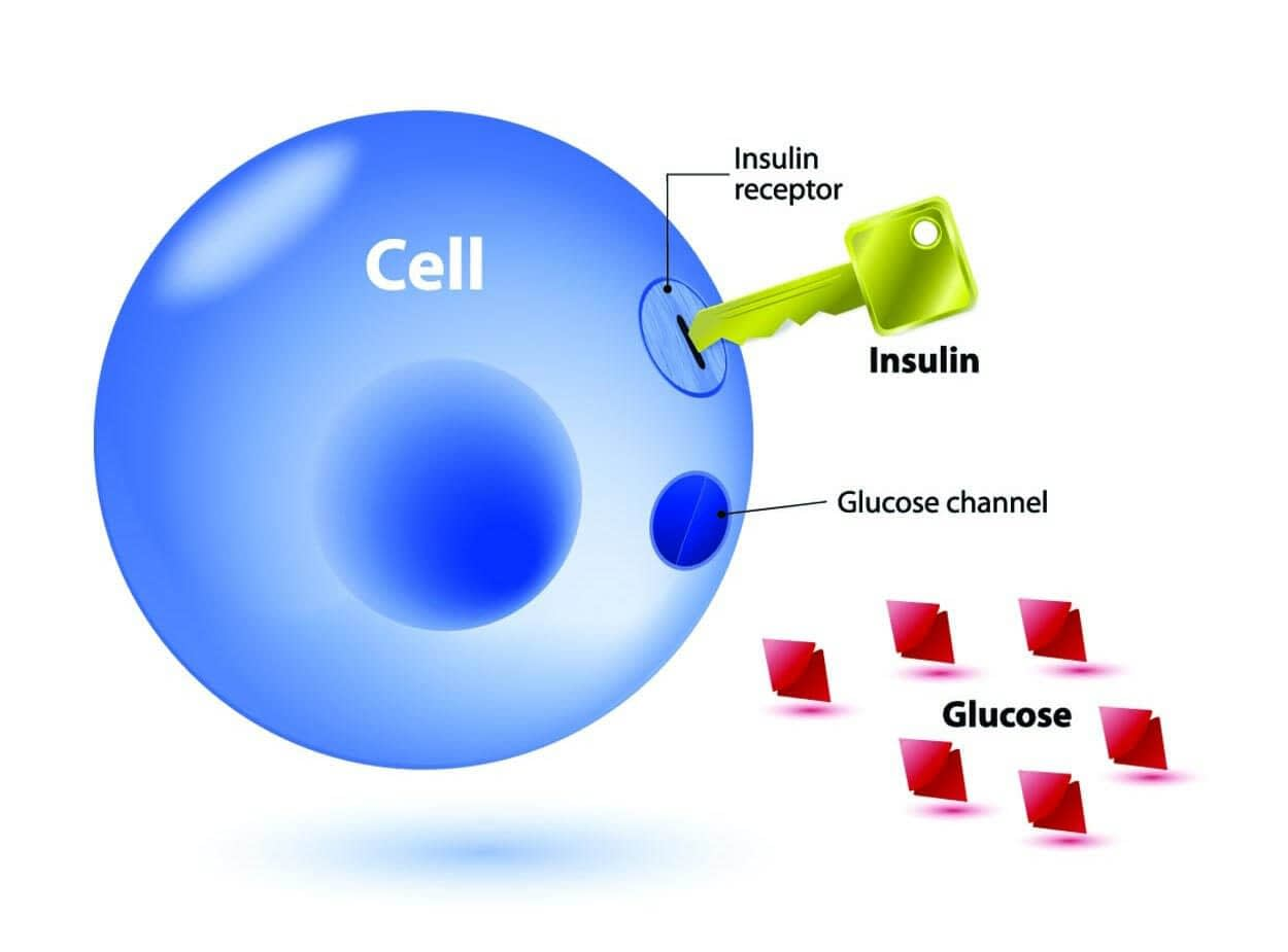 cells need insulin to use glucose as energy 1