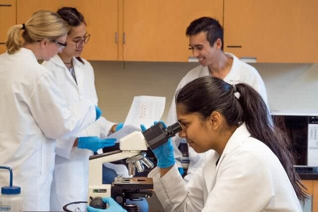 does tribulus terrestris influence androgen production