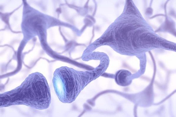 dopamine erection 598x398 1