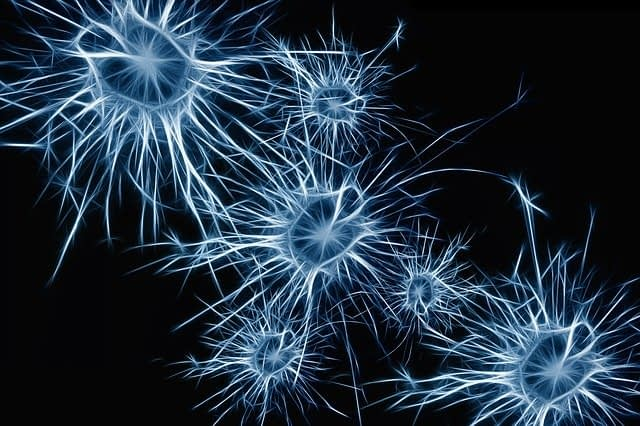 dopamine neurotransmitter in the brain