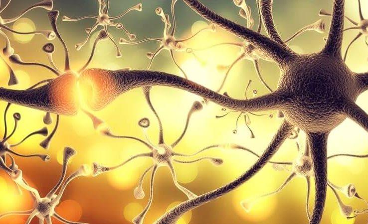 dopamine receptor decline e1588496307715