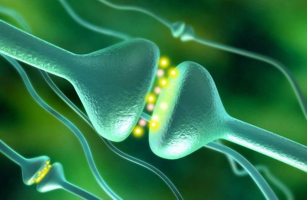 dopamine receptor e1599143290939