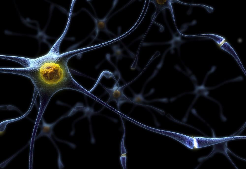 dopamine receptor in the brain