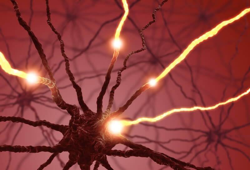 dopamine receptors break down