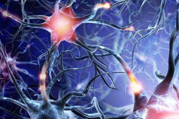 dopamine receptors in brain 1024x734 1 598x398 1
