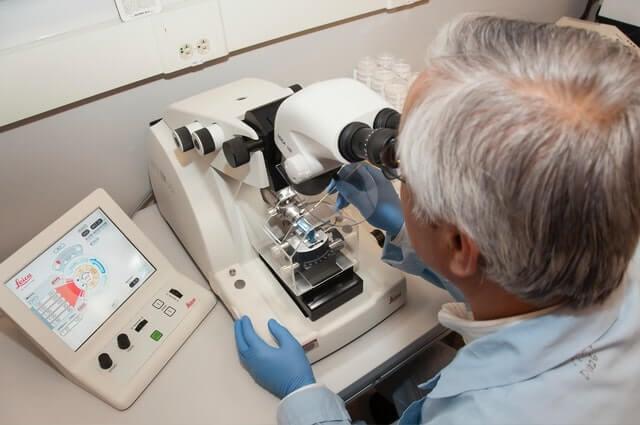 effect of tribulus alatus extracts on free serum testosterone
