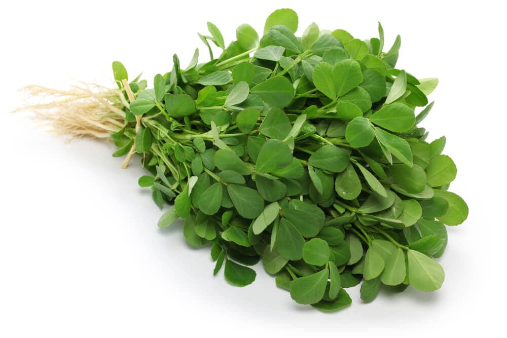 fenugreek has been used as a food and medicine for more than 6000 years