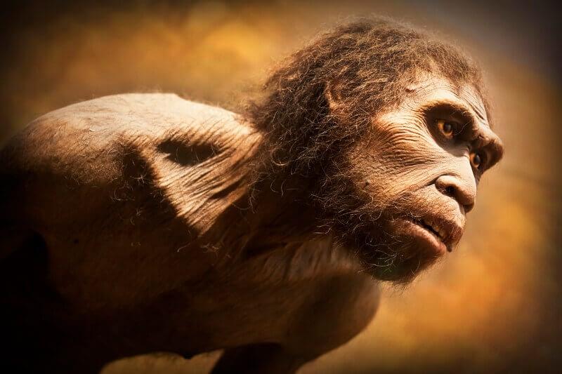 homo sapiens erectile dysfunction