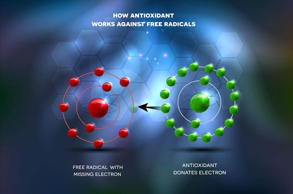 how antioxidants work against free radicals