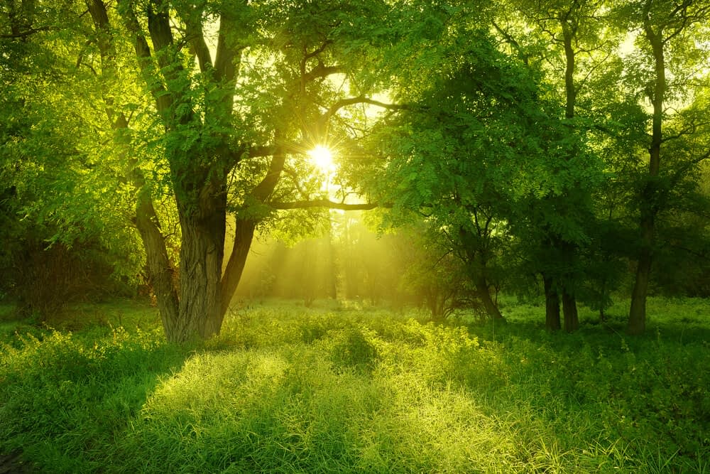 it is practically impossible to overdose on vitamin d3 from sunlight