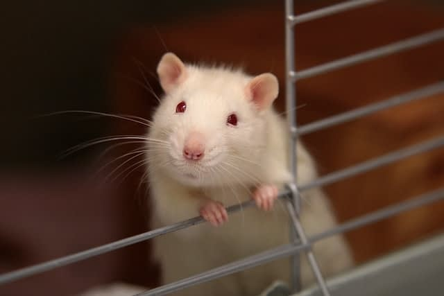 lack of sleep decreases nitric oxide production in rats