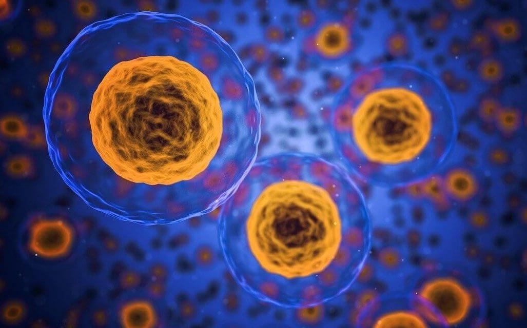 leydig cells e1600613908819