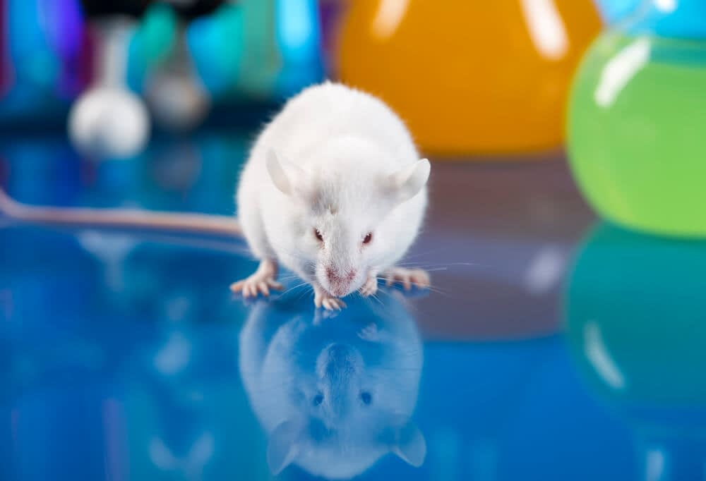 magnesium experiment on rats