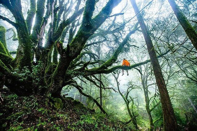 man in tree