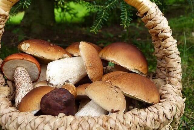 mushrooms erectile dysfunction e1589045239451