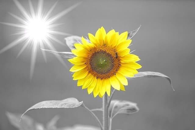 sunshine makes my body and mind wake up