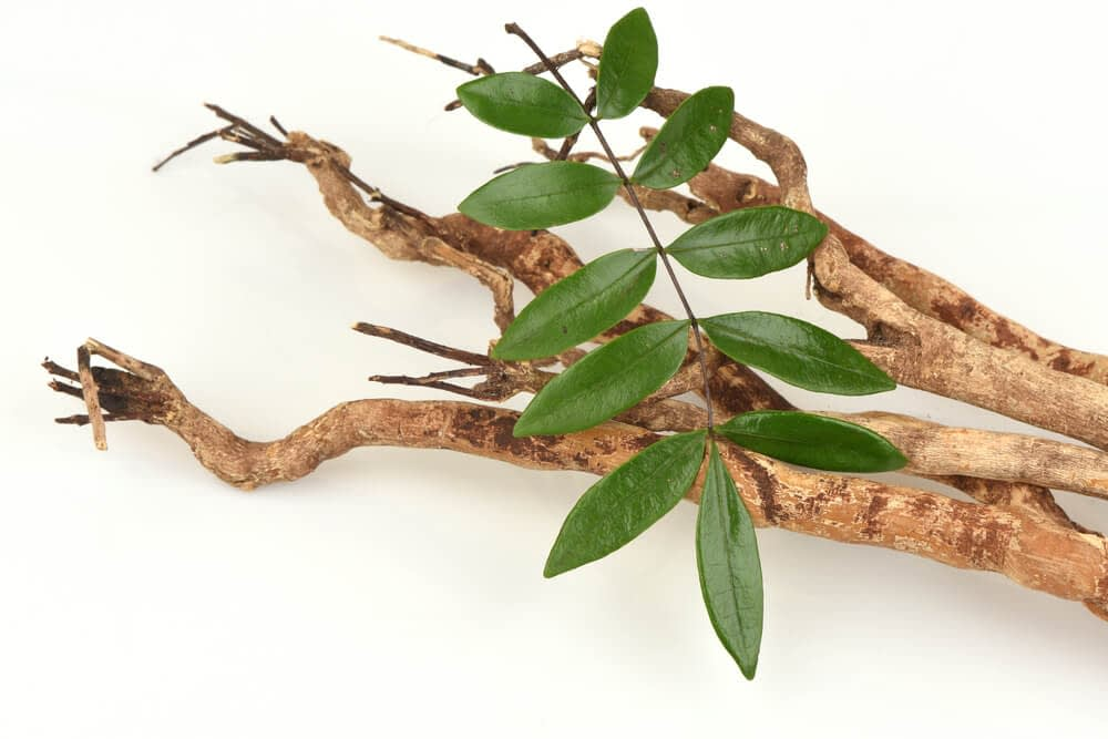 tongkat ali can help you overcome erectile dysfunction