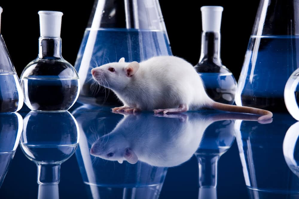 tribulus terrestris effect on fertility in rats