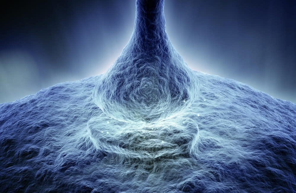 zinc keeps your androgen receptors in shape e1600602262111